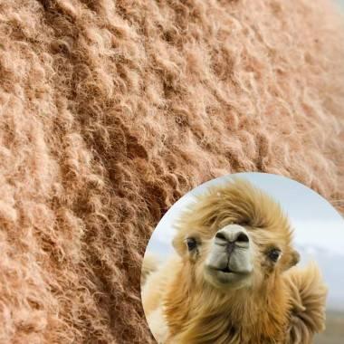 CAMEL DUO - Duvet au poil de chameau